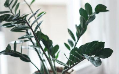 Préservez vos plantes pendant vos absences !