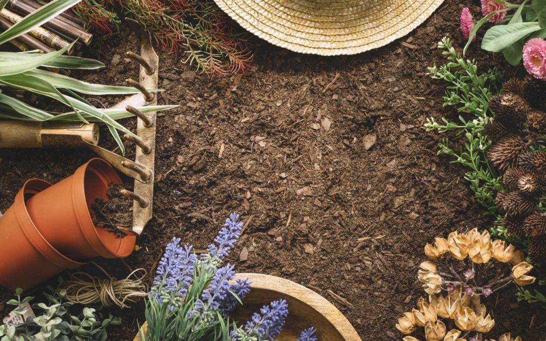 Que faire au jardin en janvier ?
