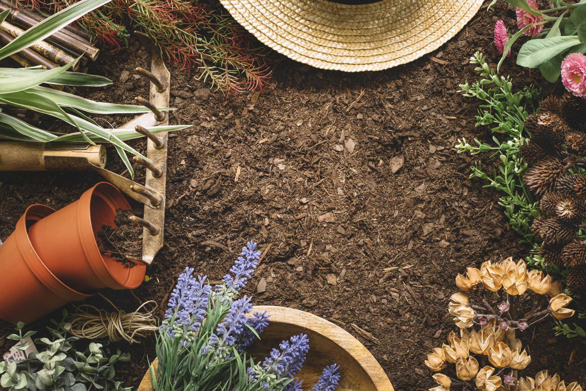 Que Faire Au Jardin En Janvier que faire au jardin en janvier ? - pépinière arcadie