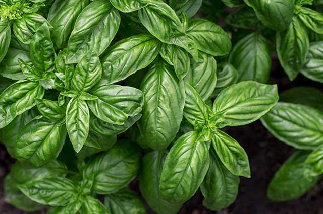 5 conseils pour un jardin de plantes aromatiques